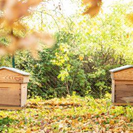 hives-installation